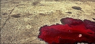 Pool of blood on stone surface