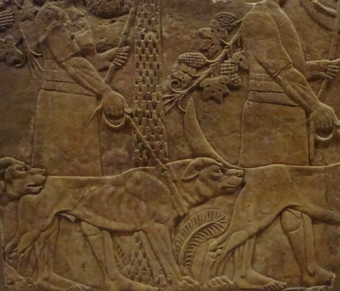 Dogs in the Bible: Assyrian hunting dogs; the kings of Israel and Judah may have had dogs like these