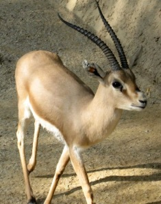 Tabitha is a Jewish name meaning 'gazelle'