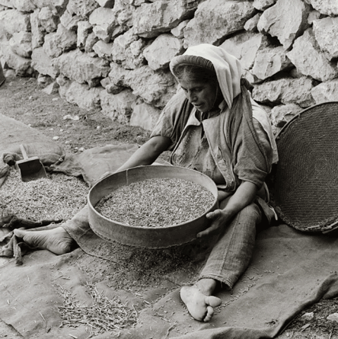 Parable of the Sower: a woman sifting seed to separate edible grain from weeds