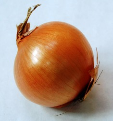 Food in the Bible: a ripe onion