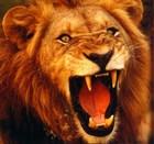 Brave as a lion