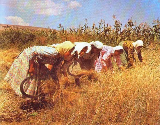 Farming Agriculture In The Ancient World Of The Bible