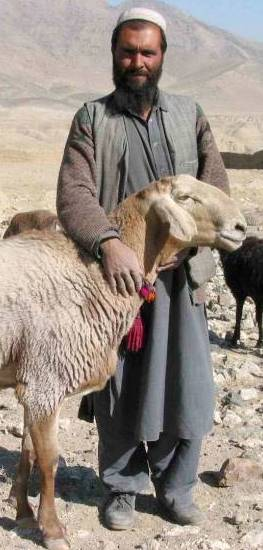 Shepherd with sheep in wild terrain