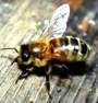 Deborah meaning 'bee'