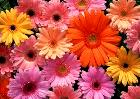Many different coloured flowers: which one to choose?