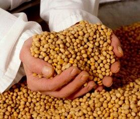 Abundant grain