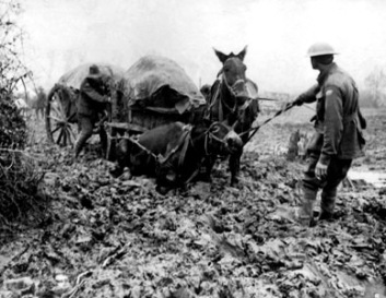 War horses trapped in thick mud