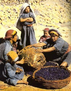 Bible study activities: Ruth. Middle Eastern women processing a newly harvested crop