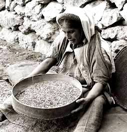 Village woman sifting grain