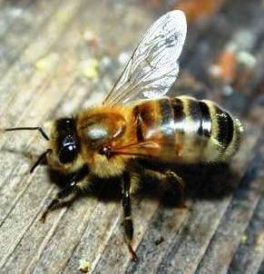 Bible Heroines. 'Deborah' means 'bee'; a small creature that can cause great pain