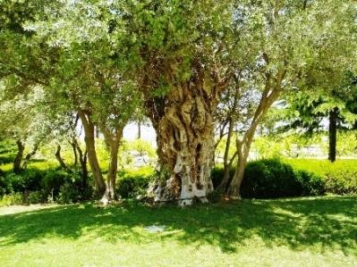 Genesis tree of knowledge