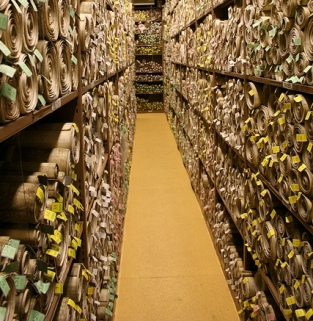 Shelves holding hundreds of ancient scrolls