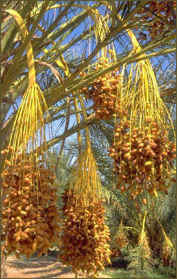 Tamar means 'date palm'; the name suggests food, security and life