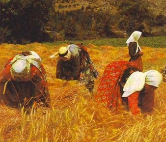 Women gleaning in the fields