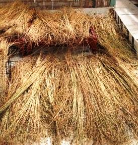 Bundles of dried flax
