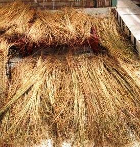 Bundles of dried flax