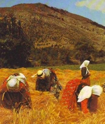 Women gleaning in the fields