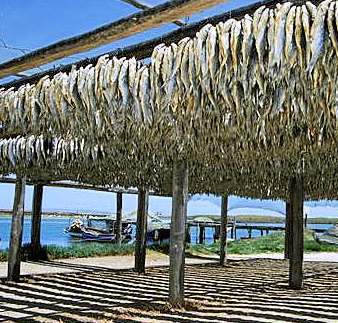 Clean and unclean foods. Dried fish on racks