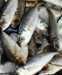 Harvested fish