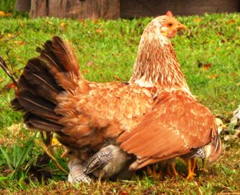 Trust God. The Bible likens God to a hen that fiercely guards its chicks