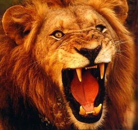 Zephaniah: members of the legal profession are roaring lions