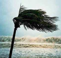 Recovery Meditation: Palm tree bending in a storm