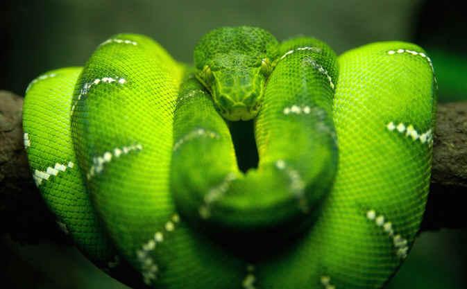 Bad Bible Villains: THE SERPENT IN THE GARDEN OF EDEN