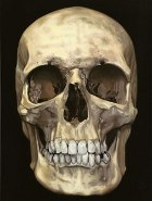 Photograph of a skull