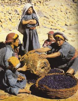 Family, work, worship: women crushing olives