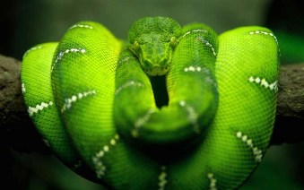Bad Bible Women: Eve. Green snake on tree branch