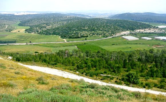 The beautiful Valley of Elah, where David looked down at the enemy